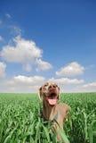 Cão no campo Fotografia de Stock Royalty Free