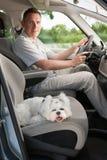 Cão no carro foto de stock royalty free