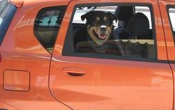 Cão no carro imagens de stock royalty free