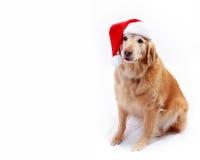 Cão no chapéu de Santa Fotografia de Stock Royalty Free