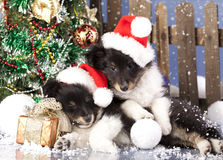 Cão no chapéu de Santa Imagens de Stock