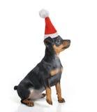 Cão no chapéu de Santa Fotografia de Stock