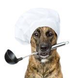 Cão no chapéu do cozinheiro chefe que guarda a concha na boca Isolado Fotografia de Stock Royalty Free