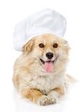 Cão no chapéu do cozinheiro chefe que olha a câmera Imagens de Stock Royalty Free