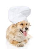 Cão no chapéu do cozinheiro chefe que olha a câmera no backgroun branco Imagens de Stock