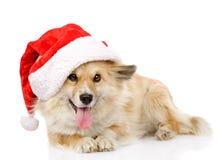 Cão no chapéu vermelho de Saanta do Natal, no fundo branco Imagem de Stock Royalty Free