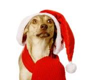 Cão no chapéu vermelho de Santa do Natal que olha acima Isolado no CCB branco Imagem de Stock