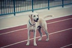 Cão no corredor da trilha imagem de stock
