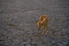 Cão no deserto Imagens de Stock Royalty Free