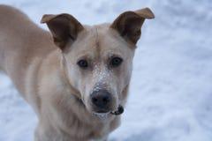 Cão no dia de inverno Fotografia de Stock Royalty Free
