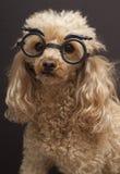 Cão no disfarce fotografia de stock royalty free