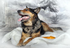 Cão no inverno Foto de Stock