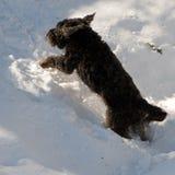 Cão no inverno Foto de Stock Royalty Free