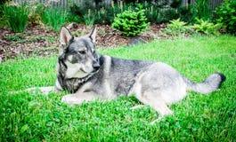 Cão no jardim Foto de Stock