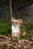 Cão no jardim fotografia de stock