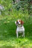 Cão no jardim do verão Foto de Stock