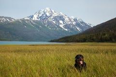 Cão no jogo no campo Foto de Stock Royalty Free