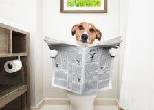 Cão no jornal da leitura do assento da sanita imagens de stock royalty free
