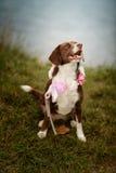 Cão no lago Foto de Stock