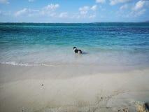 Cão no mar foto de stock royalty free
