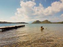 Cão no mar que tem um banho Imagens de Stock