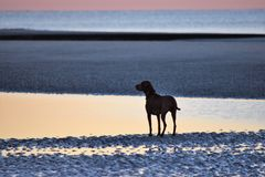 Cão no oceano no nascer do sol Imagens de Stock Royalty Free