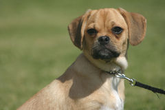 Cão no parque Imagem de Stock