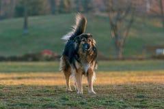 Cão no parque Foto de Stock
