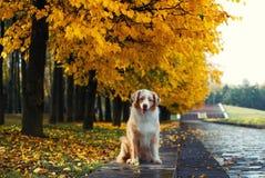 Cão no parque do outono Imagem de Stock Royalty Free