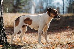 Cão no parque outdoors imagens de stock