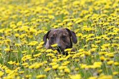 Cão no prado fotos de stock royalty free