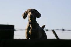 Cão no protetor Foto de Stock Royalty Free