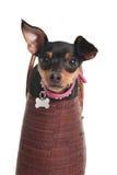 Cão no saco Imagem de Stock
