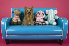 Cão no sofá azul retro Imagem de Stock
