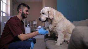 Cão no sofá que dá a pata ao doutor do veterinário na clínica video estoque