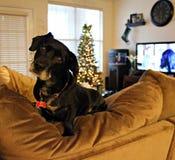 Cão no tempo do Natal imagens de stock royalty free