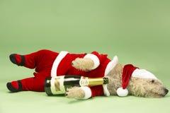 Cão no traje de Santa fotos de stock royalty free
