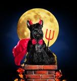 Cão no traje do Dia das Bruxas do diabo fotografia de stock