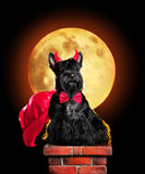 Cão no traje do Dia das Bruxas do diabo que senta-se na chaminé fotos de stock royalty free