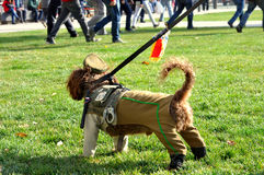 Cão no uniforme da polícia Imagens de Stock