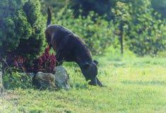 Cão no verde fotografia de stock royalty free