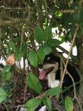 Cão nos arbustos Fotos de Stock Royalty Free