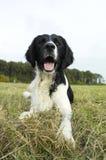 Cão novo no outono feliz do campo Imagem de Stock Royalty Free