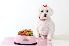 Cão obediente Imagem de Stock Royalty Free