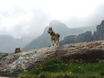 Cão ocidental de Laika do Siberian em montanhas nebulosas Imagens de Stock Royalty Free