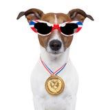 Cão olímpico Fotografia de Stock Royalty Free