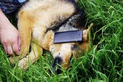 Cão-pastor alemão bonito que encontra-se na grama verde Foto de Stock Royalty Free