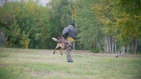 Cão pastor do treinamento no ataque em um braço A proteção vestindo do homem video estoque
