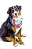 Cão patriótico Imagens de Stock