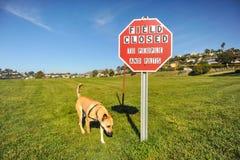 Cão pelo sinal fechado do campo para animais de estimação e povos Fotos de Stock